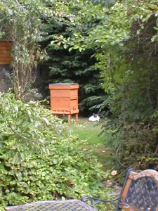 Garden hive,cat on guard!