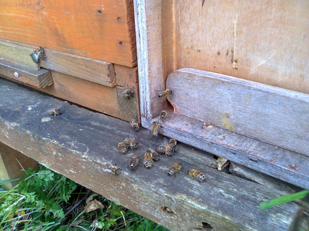 No 7 swarm and nuc timber 002