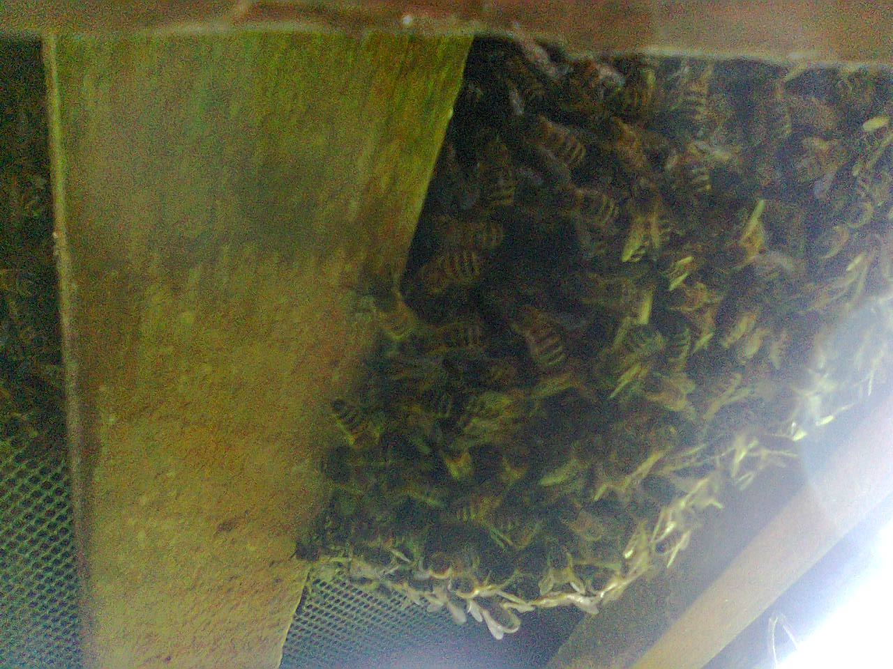 No 7 swarm and nuc timber 007