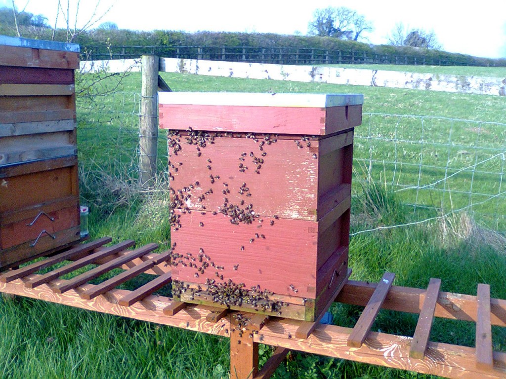 Fit double brood hive 2 Camely 001