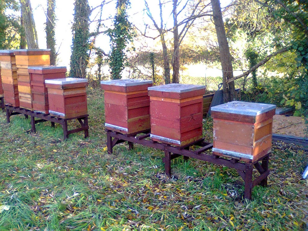Hive 4 at Station Apiary 003
