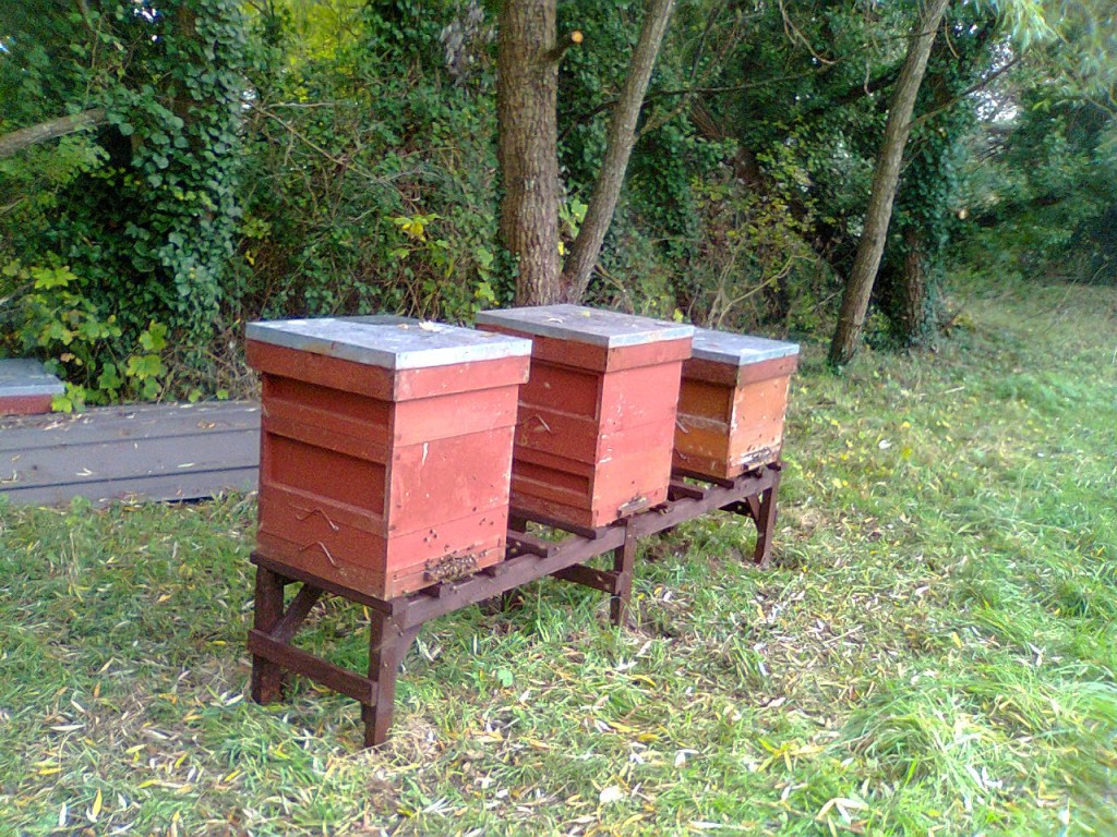 Station Apiary, flying bees 001