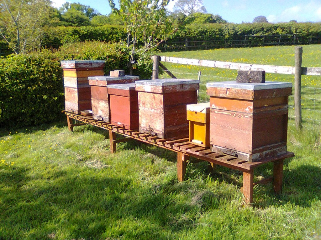 Cameley hives 001